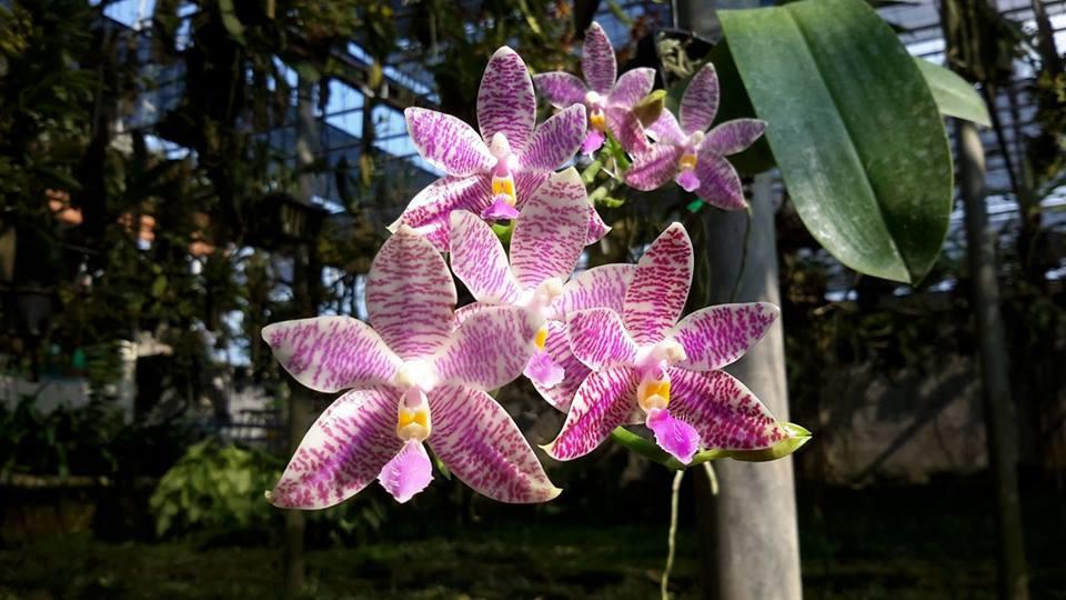 orchideenausstellung in celle